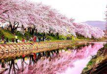 Cuándo viajar a Japón