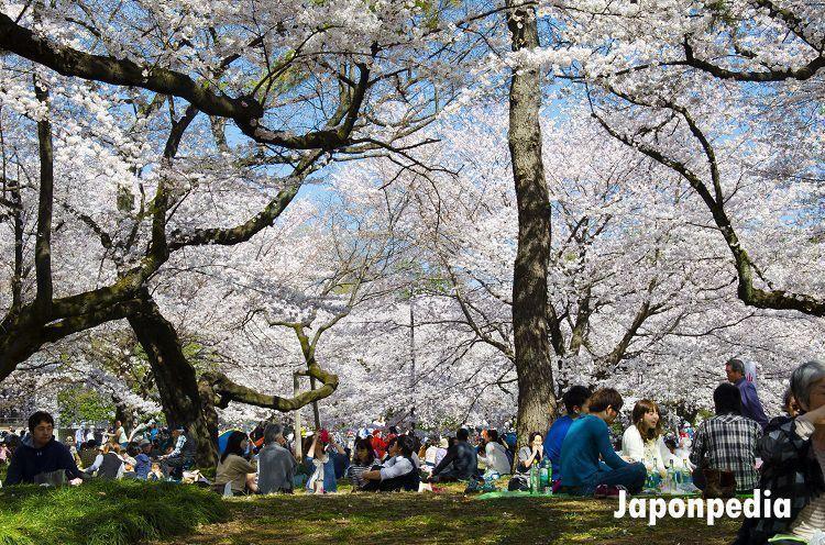hacer hanami en Japón