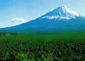Aokigahara. El bosque de los suicidas. Japón