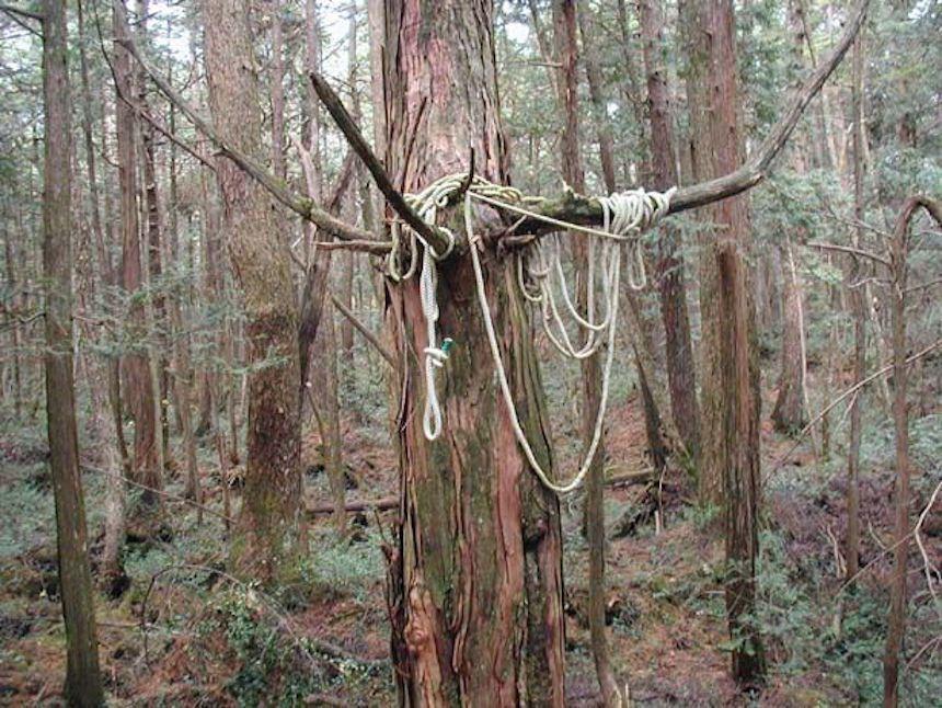 Aokigahara. El bosque de los suicidas de Japón