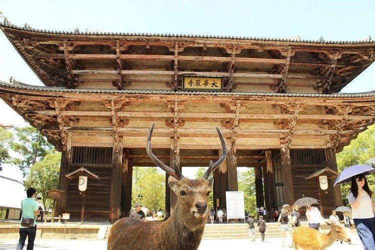 El Templo Todaiji de Nara