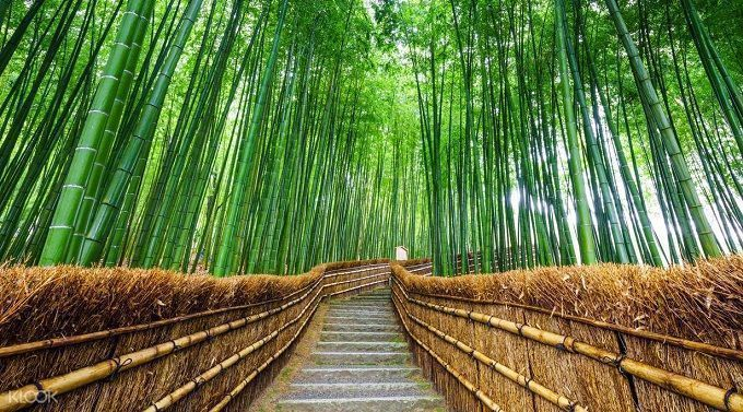 viajar a Japón - Arashiyama Kioto.