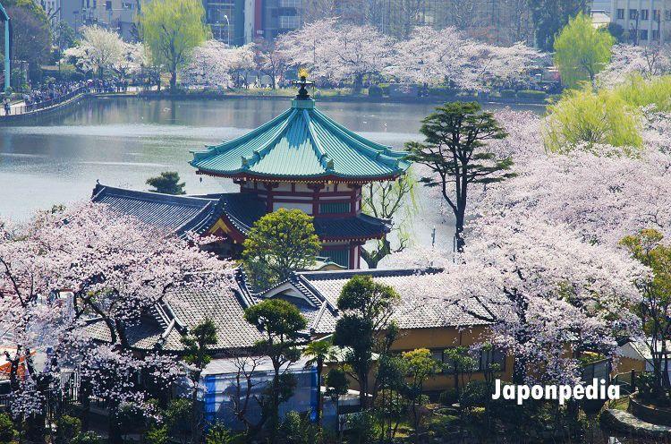 Sakura Japón previsiones 2021