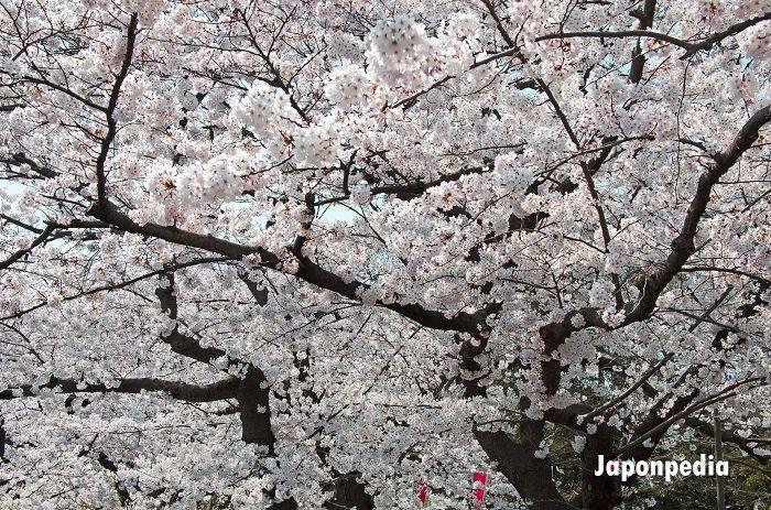 Japón en abril que ver