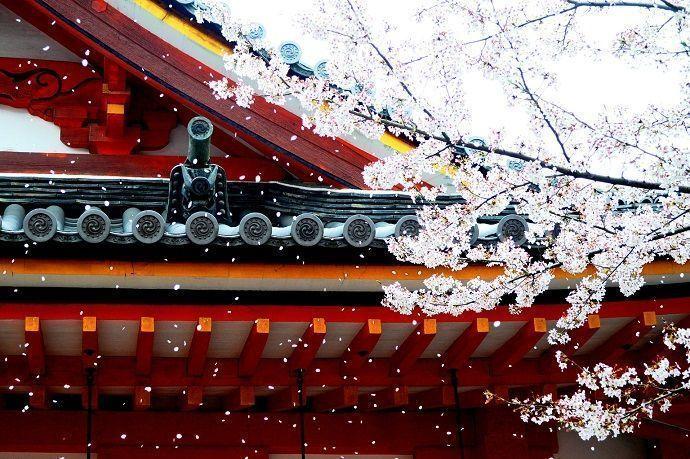 Pronóstico 2021 sakura en japón