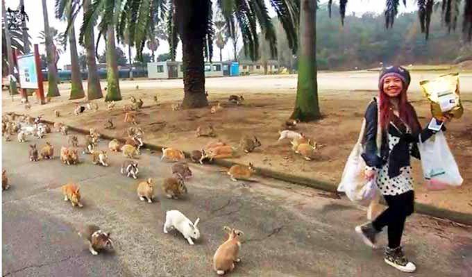 Curiosidades de Japón. La isla de los conejos.