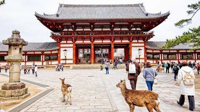 Guía privado en Nara e Inari desde Kioto