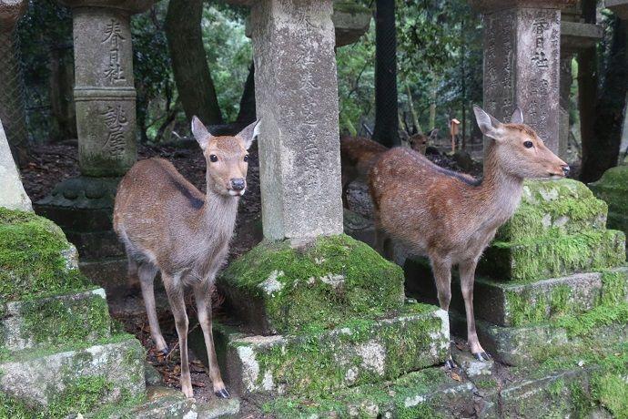 Reservar Guía en Nara.
