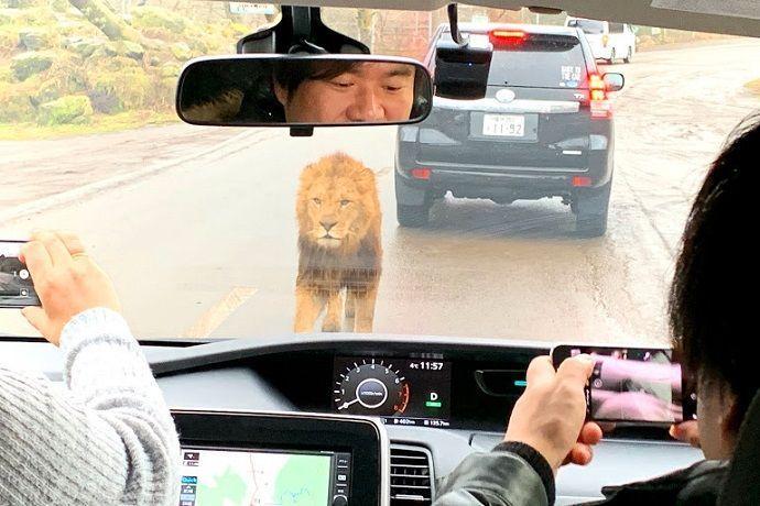 Comprar entradas Fuji Safari Park