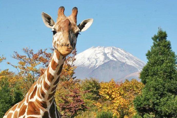 Zoológico Fuji Safari Park
