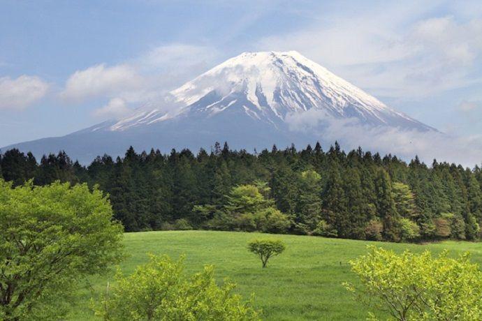 Excursión por Aokigahara.