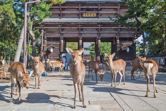 Tour privado por Nara