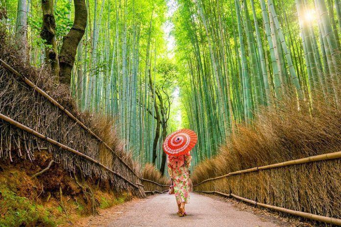 Viaje fotográfico Japón
