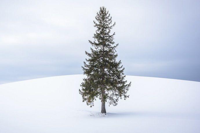 Viaje fotográfico Japón invierno
