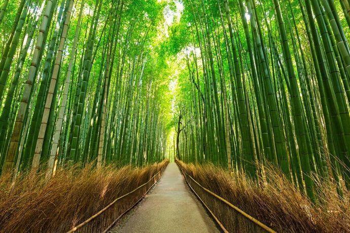 Excursión por Arashiyama