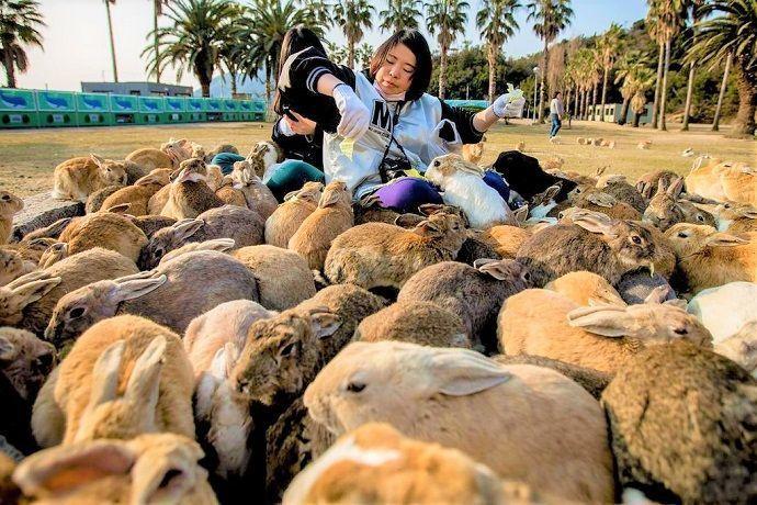 Okunoshima, isla de los conejos.
