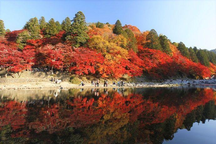 Excursión al valle de Korankei desde Nagoya