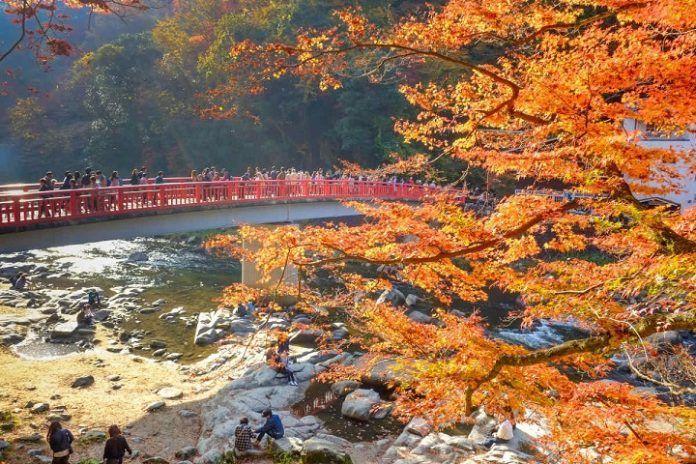 Excursión valle Korankei desde Nagoya