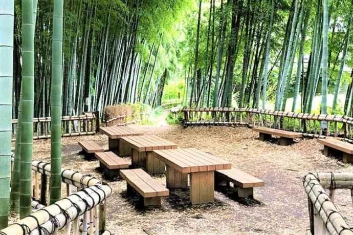 Higashikurumeshi Chikurin Tokio bambú