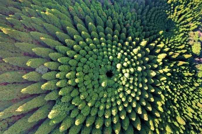 Bosque en círculo de Japón