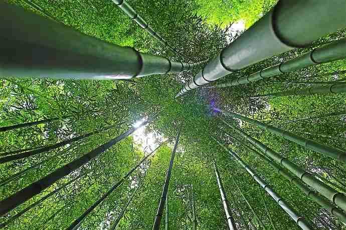 Roka Koshun-en bambú Tokio