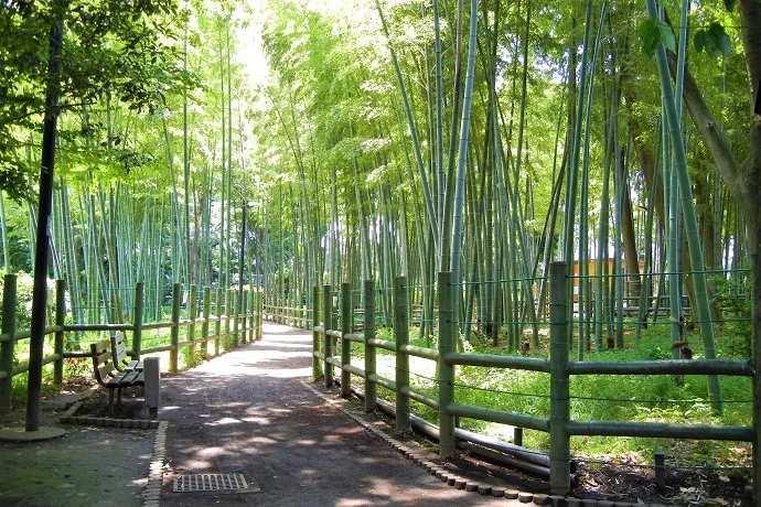 Tokio Bambú