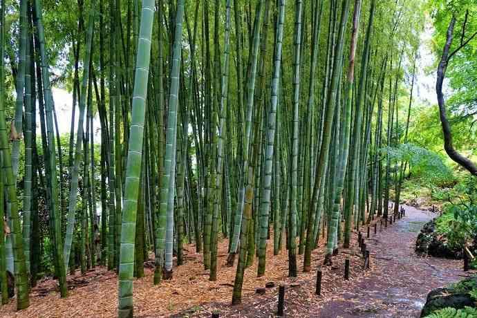 Tonogayato garden. Bambú Tokio